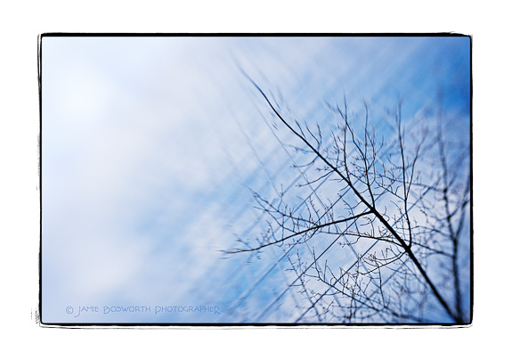 jamie_bosworth_windowtree