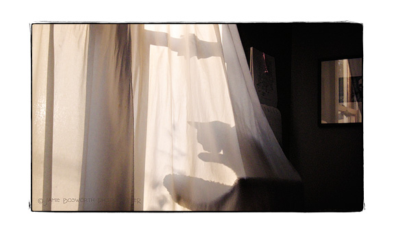cat_curtains