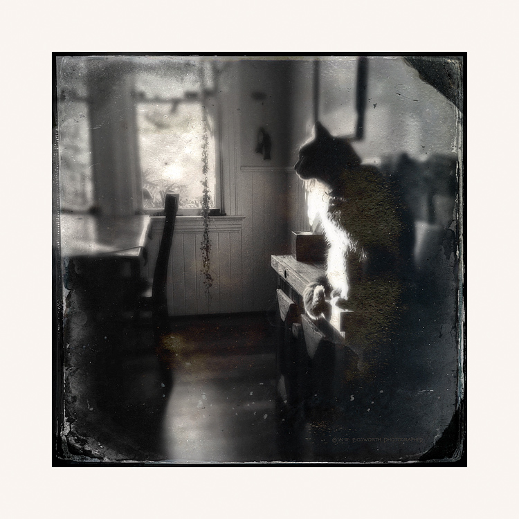 Frankie-Hipstamatic-Tinto1884-D-Type-Plate-Jamie-Bosworth-Photographer